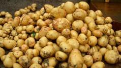 Картофель полезные свойств