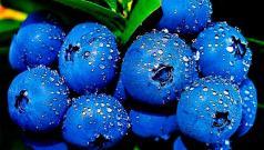 Голубика полезные свойства